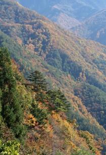 紅葉の山脈