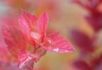 紅葉の低木