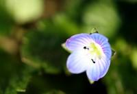 一輪だけの花