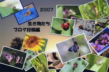 昆虫たちの写真