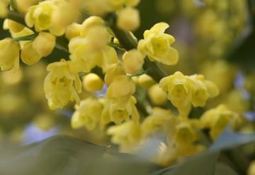 ちょうちんのように下を向いて咲く花