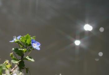 ちいさな花と小川