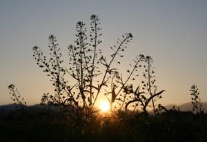 夕暮れの太陽