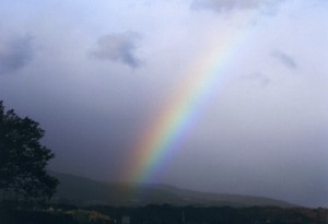 どんより曇り空の虹