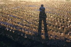 田んぼに映った長い影