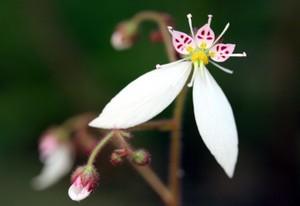 ひとつだけ咲いた花