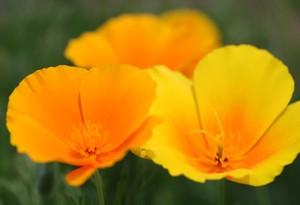 オレンジと黄色の花