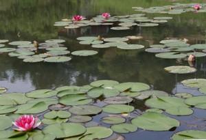 昨年増設された池