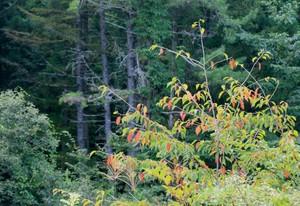 山際の木々