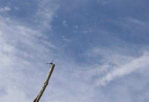 空を眺めるトンボ