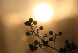 窓に映った太陽