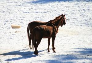 2頭のお馬さん