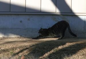 木陰で伸びをする猫