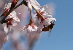 ミツバチさんがやってきた