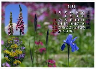 喬木村の花たち