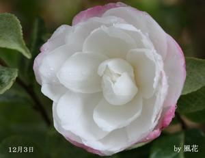 たった一つの花