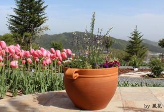 寄せ植えの鉢