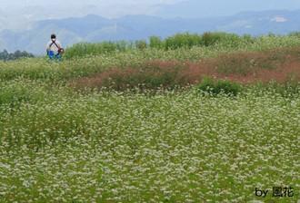 睦沢のそば畑