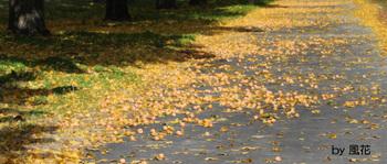 歩道の落ち葉と銀杏