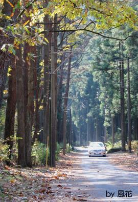 森林公園終点