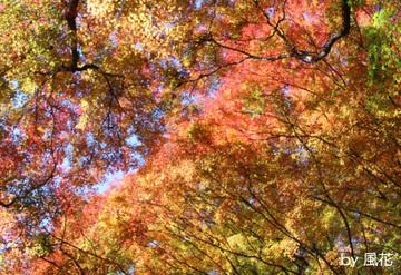 金野の紅葉