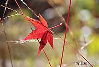 草むらの葉
