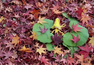 落ち葉と枯れ葉