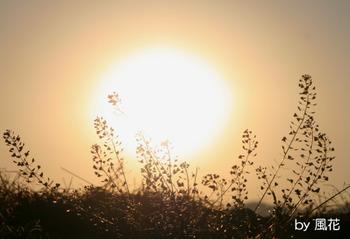 ナズナ越しの太陽