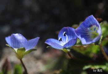 三つ並んだ花