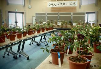 ホールの花たち