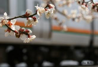 春の213系