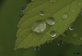 雨上がりの葉