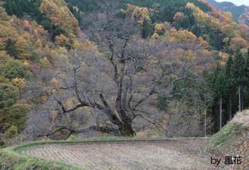 秋の駒つなぎの桜