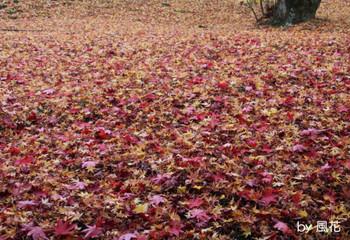 赤と黄色の絨毯