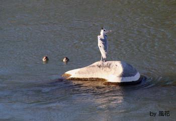 鳥たちが居る川