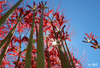群生の花の下