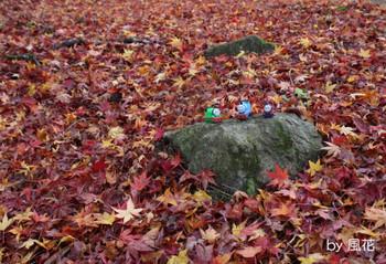 雨に濡れた落ち葉