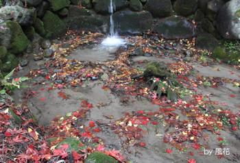 落ち葉と水の流れ