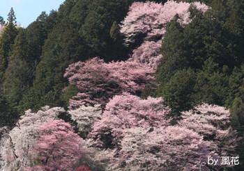 飯沼神社を望む