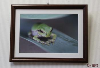 カエル写真展