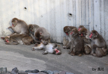 お猿さんの集団