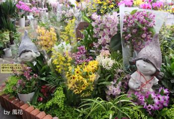 入り口側の蘭たち