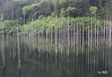緑いっぱいの自然湖